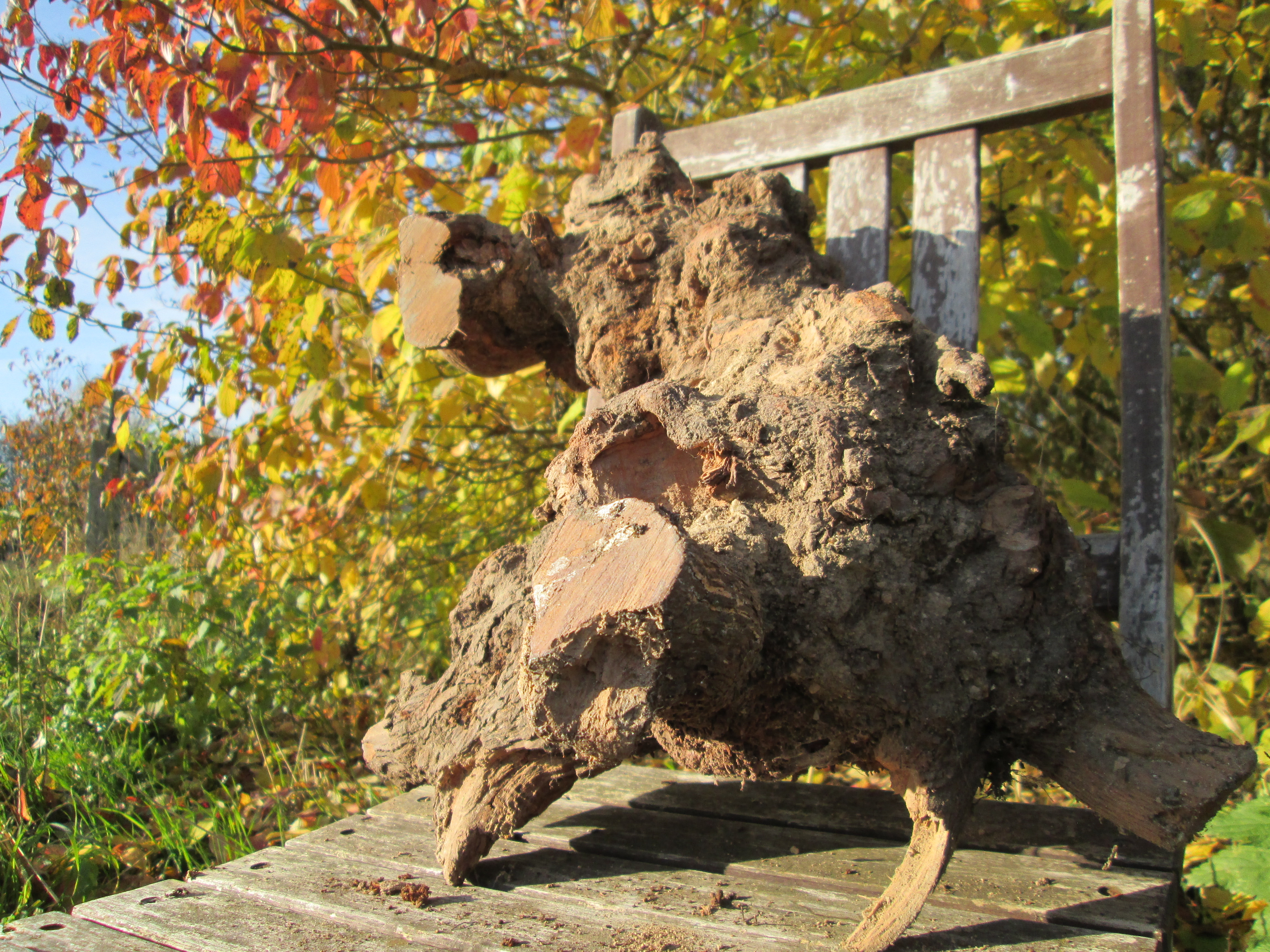 Picture of Boiling the Burls