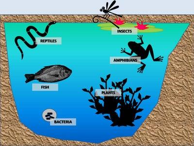 Lesson 1 - Biodiversity / Pond Residents