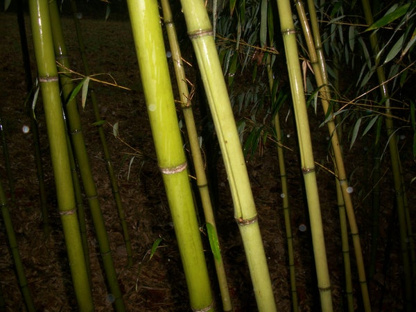 Bamboo Storage Tube