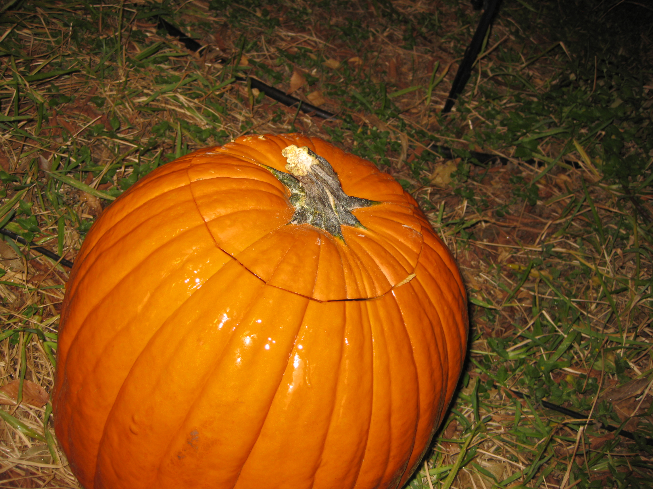 Picture of Soaking the Pumpkin