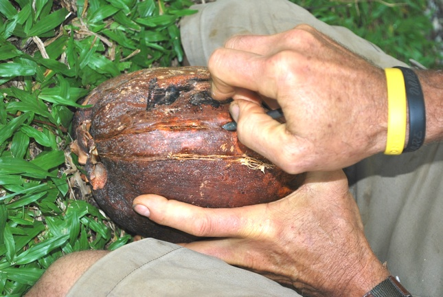 Picture of Coco Nuts!