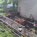 Backyard Garden 2015