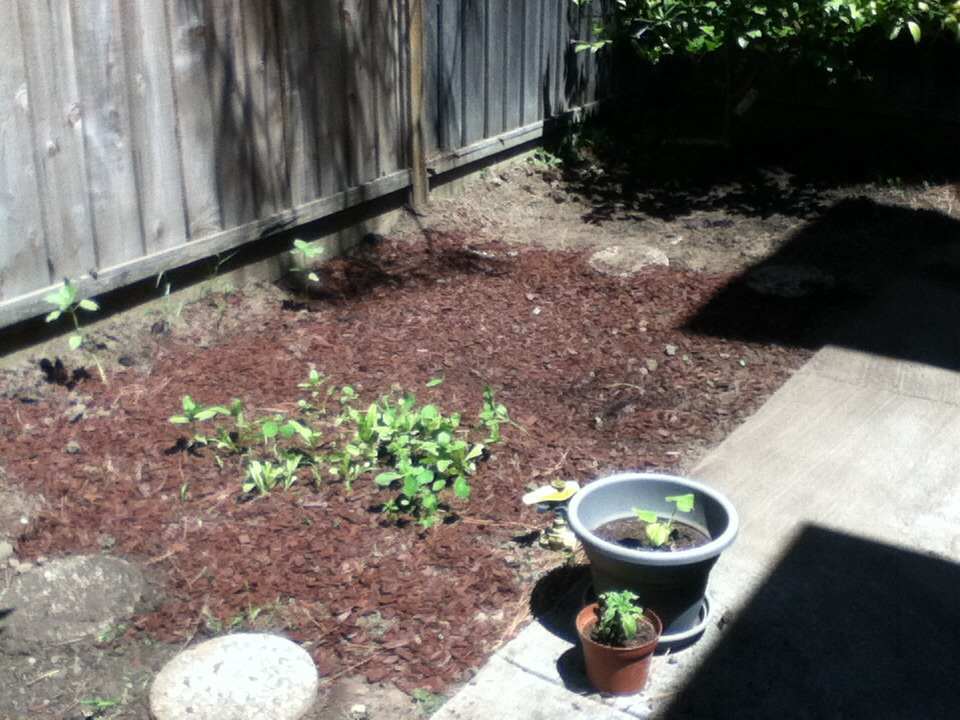 Picture of How to Start a Beautiful Garden