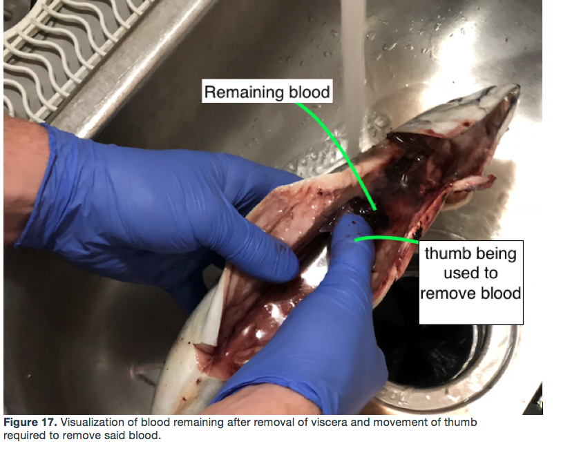Picture of Removal of Bloody Tissue Remaining in Fish's Abdominal Cavity