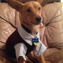 Business Dog Outfit