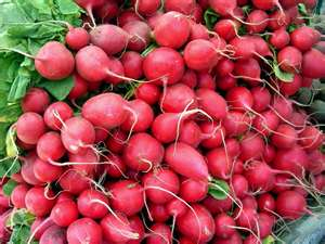 Picture of Radishes,watering,feeding,planting,growing Climates,soil