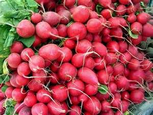 Radishes,watering,feeding,planting,growing Climates,soil