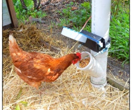 Auto Door For Chicken Feeder