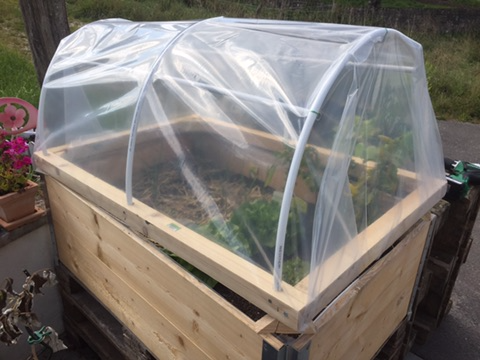 Picture of Small Greenhouse for Plantations on Euro Pallets