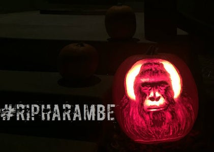 Halloween With Harmabe