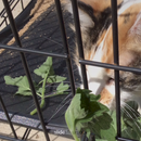 Ways to give cat medications at home, featuring elderly SMART calico cat