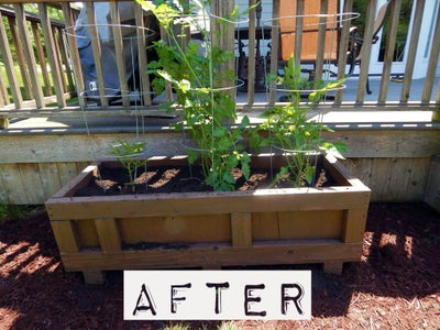 Plant Your Tomatoes or Other Plants