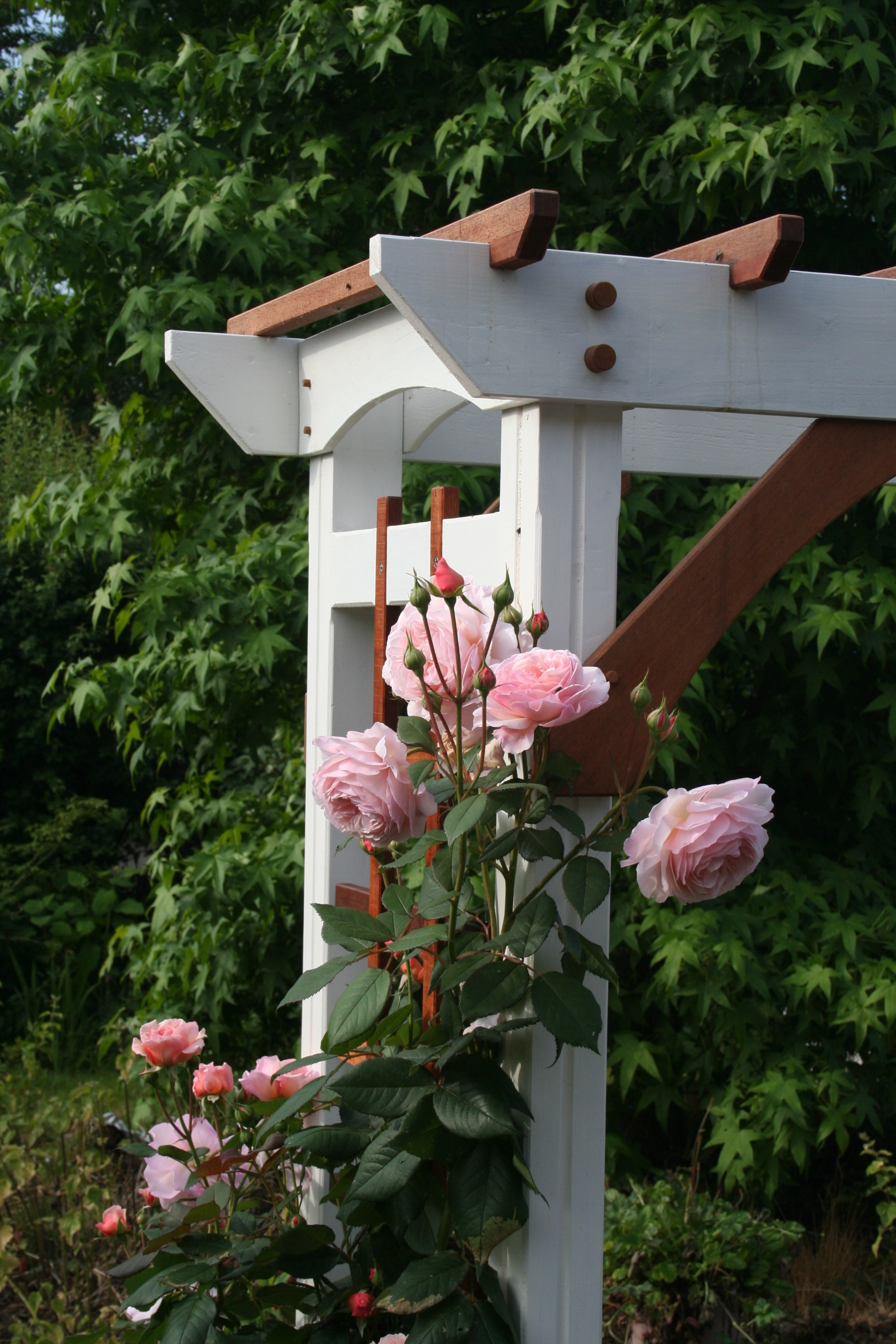 Picture of Garden Rose Arbour