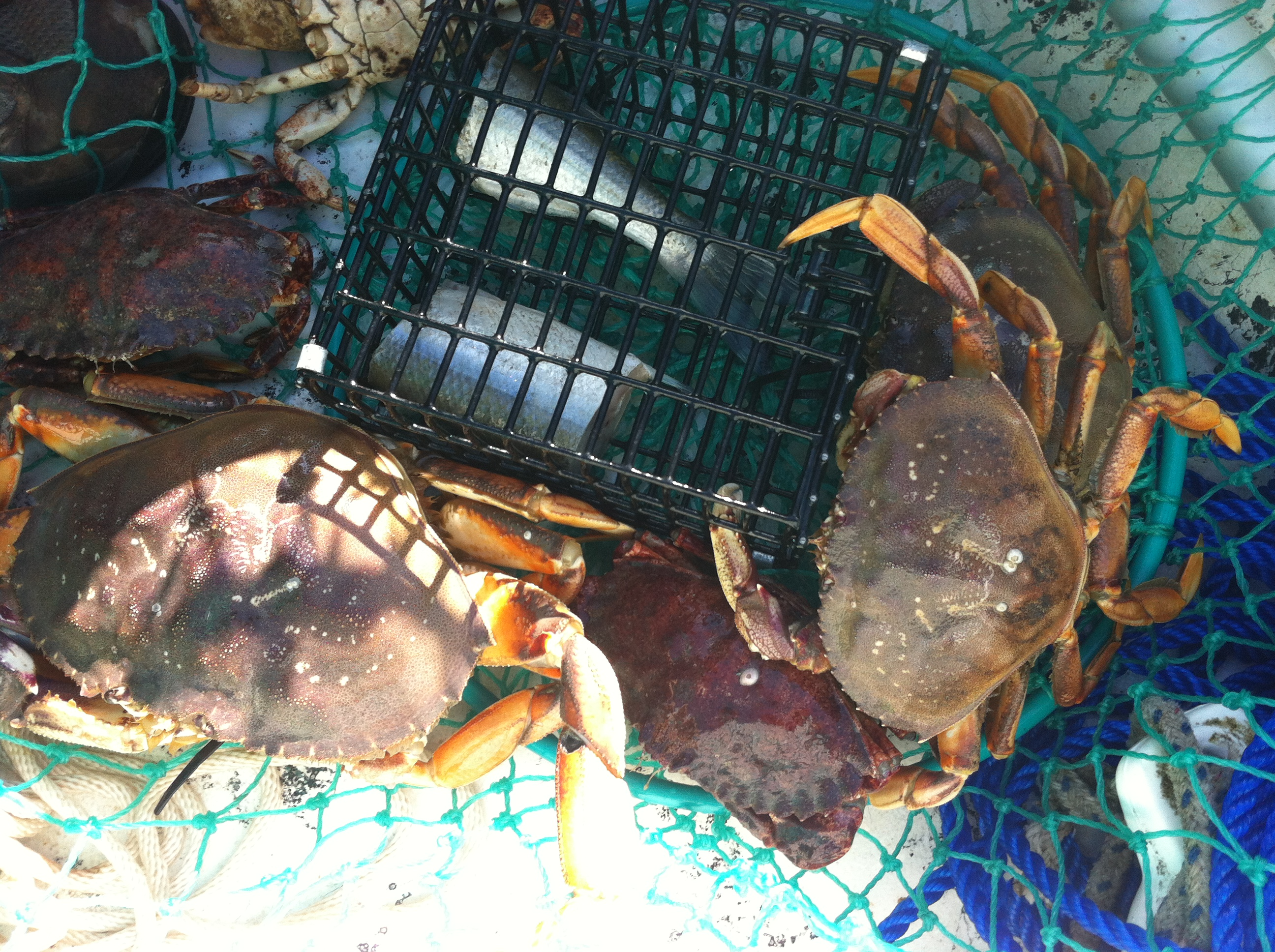Picture of Take Your Crabs Home!