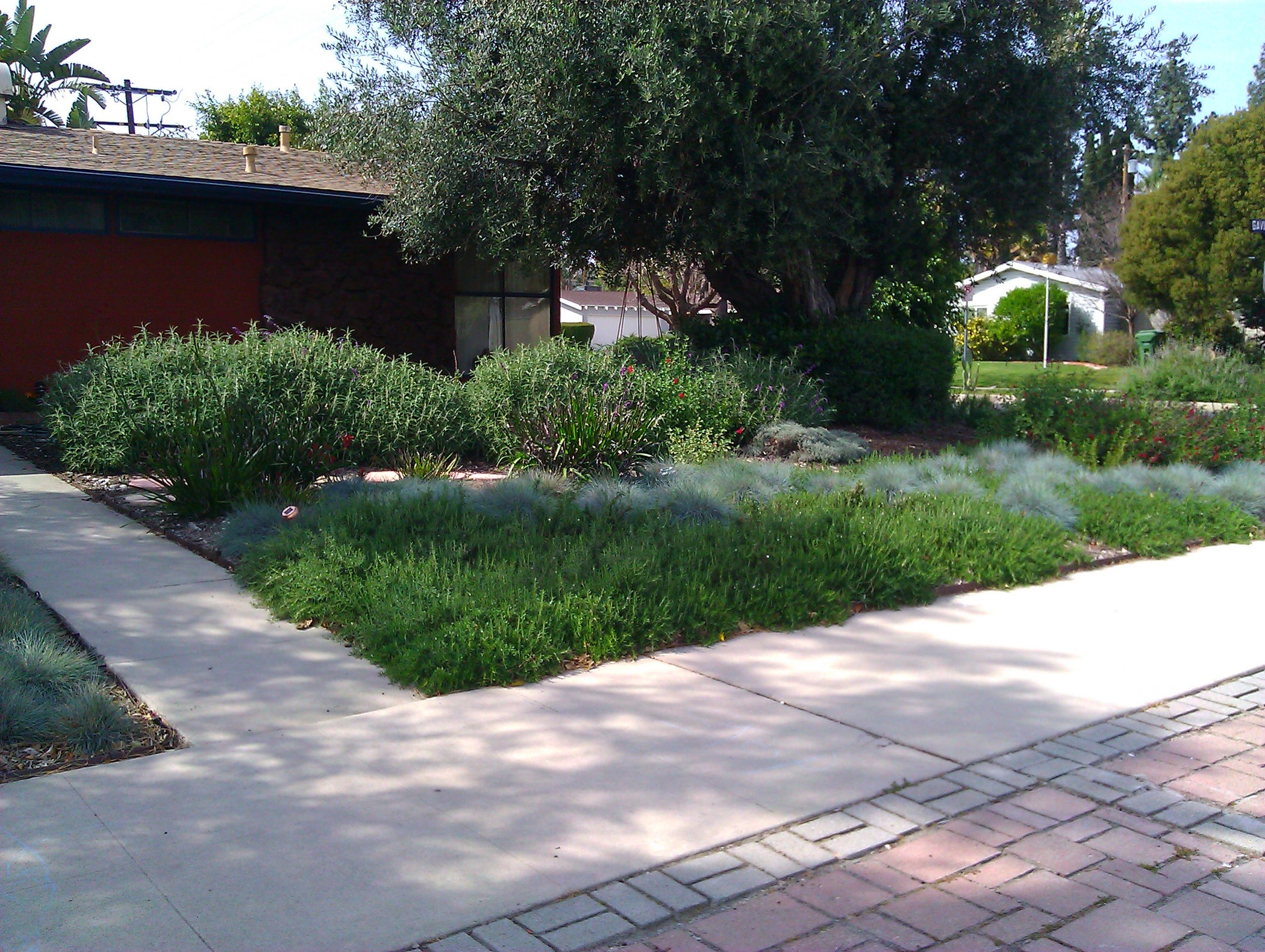 Smother And Replace Your Lawn With Mulch 10 Steps With
