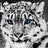 Leopard22