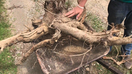 MAKE a Table Out of a Tree Stump