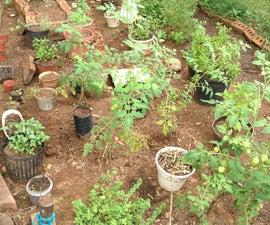 How To Grow An Herb Garden