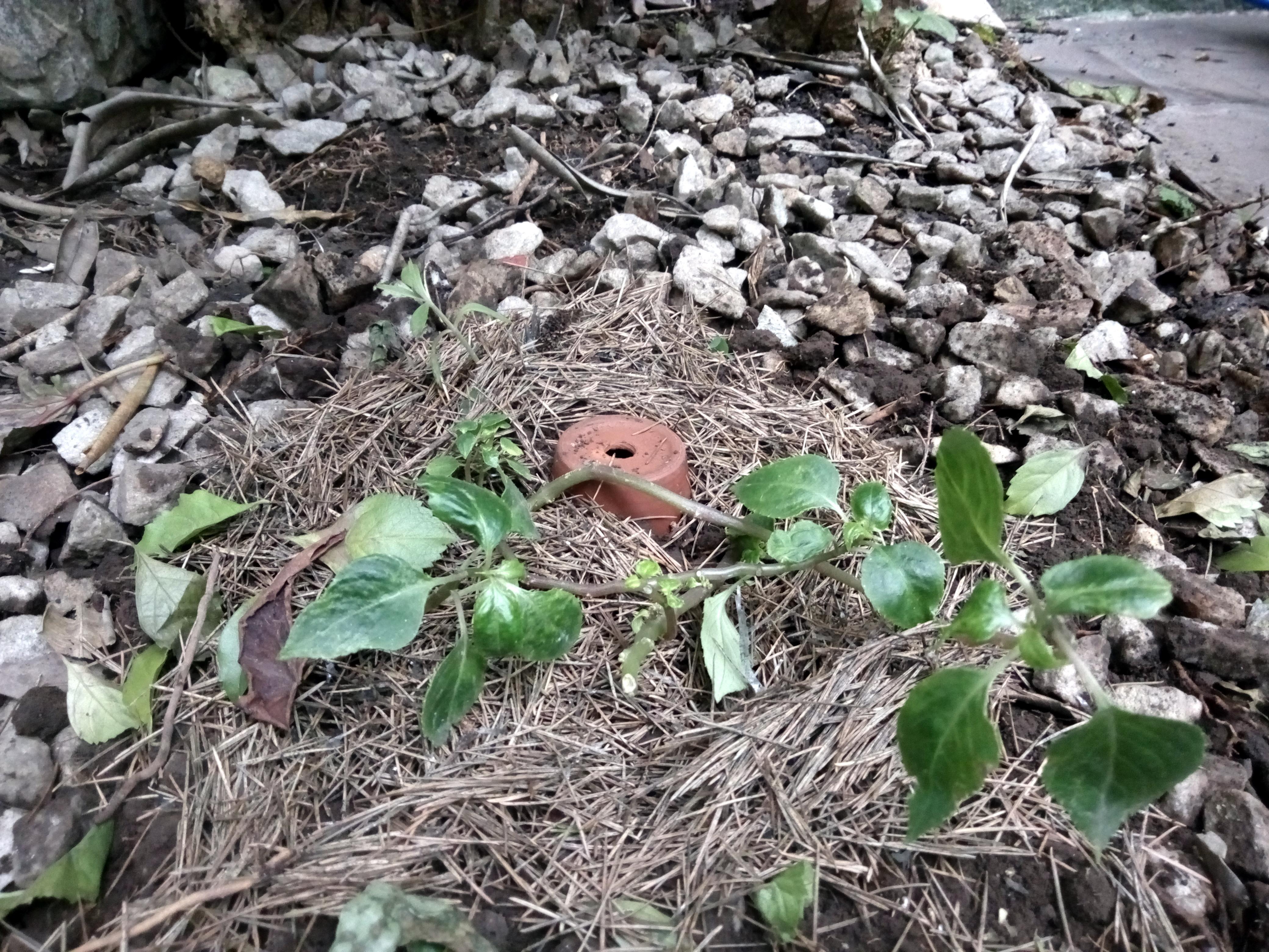 Picture of Sembrar O Plantar