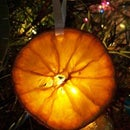 Christmas Dried Fruit Air freshener/decorations