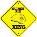 How to pick the best guinea pigs!