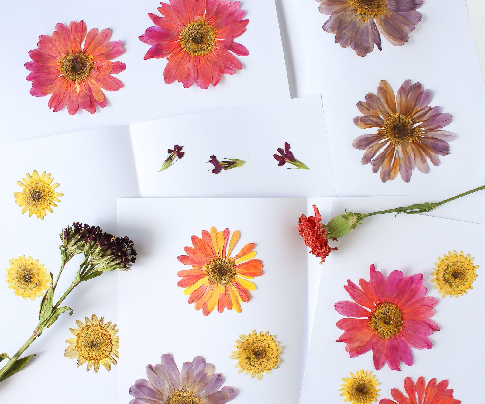 How To Press And Dry Flowers And Leaves 8 Steps With Pictures