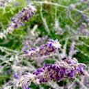 Lavender Pillow Pouch
