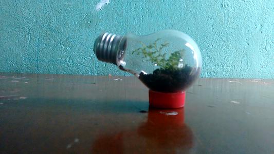 Garden Within a Lamp (terrarium in a Lamp)