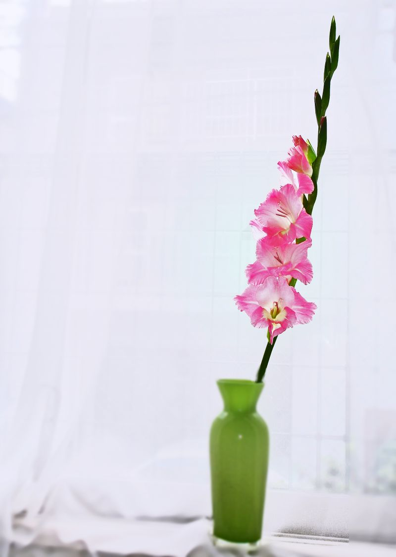 Picture of Keep Flowers Fresh