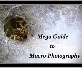 Mega Guide to Macro Photography