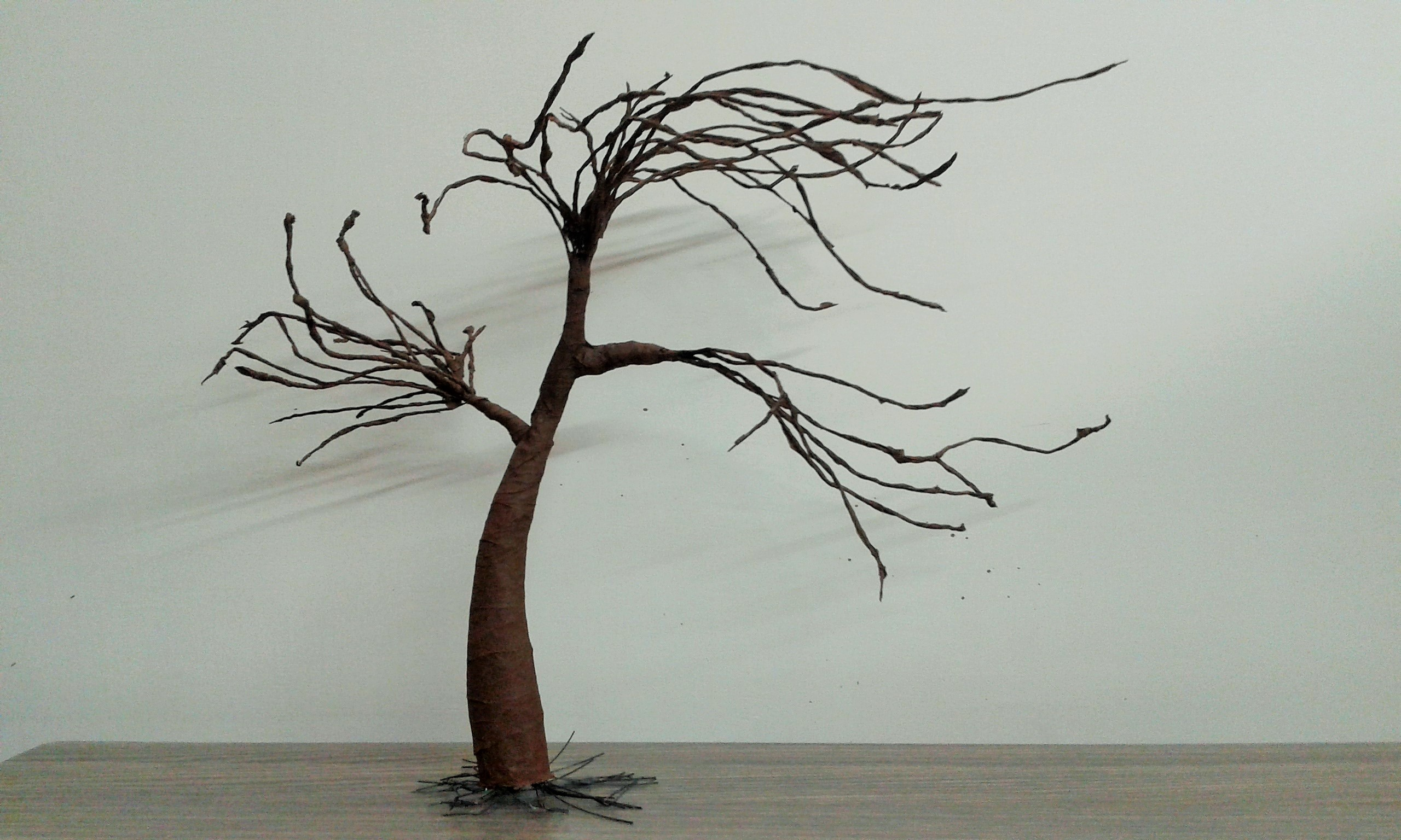 Picture of Tree Without Leaves
