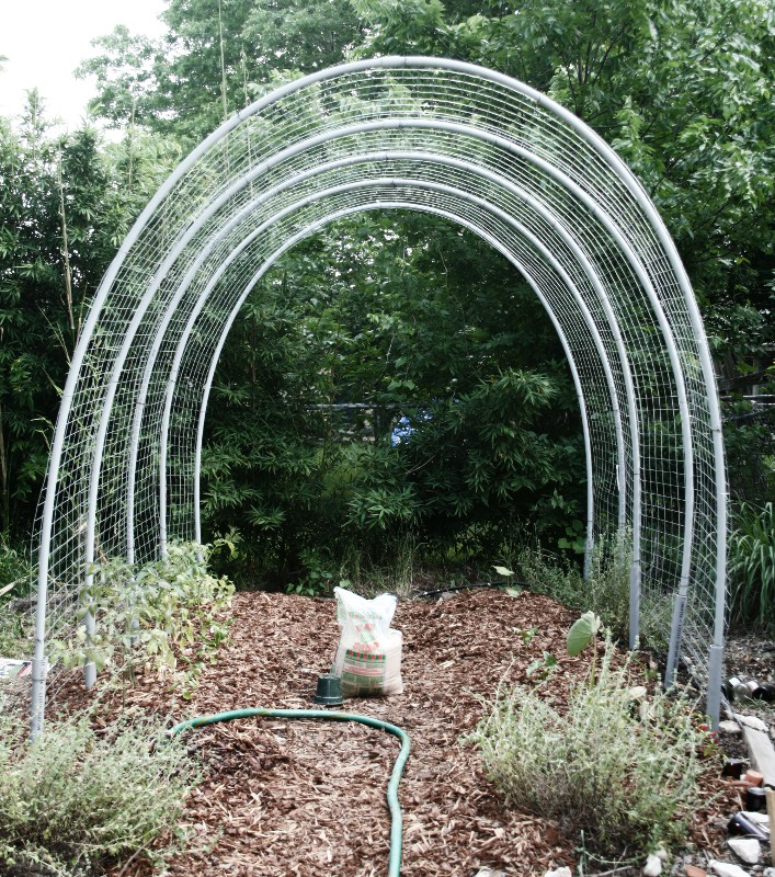 Picture of The ULTIMATE Tomato Hoop House Trellis of Death and Dismemberment