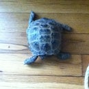 How to take care of a tortoise