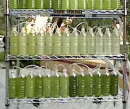An Algae Bioreactor from Recycled Water Bottles