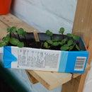Milk carton seedling container
