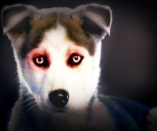 Turn Your Pet Into a Demon for Free Using Picnik!