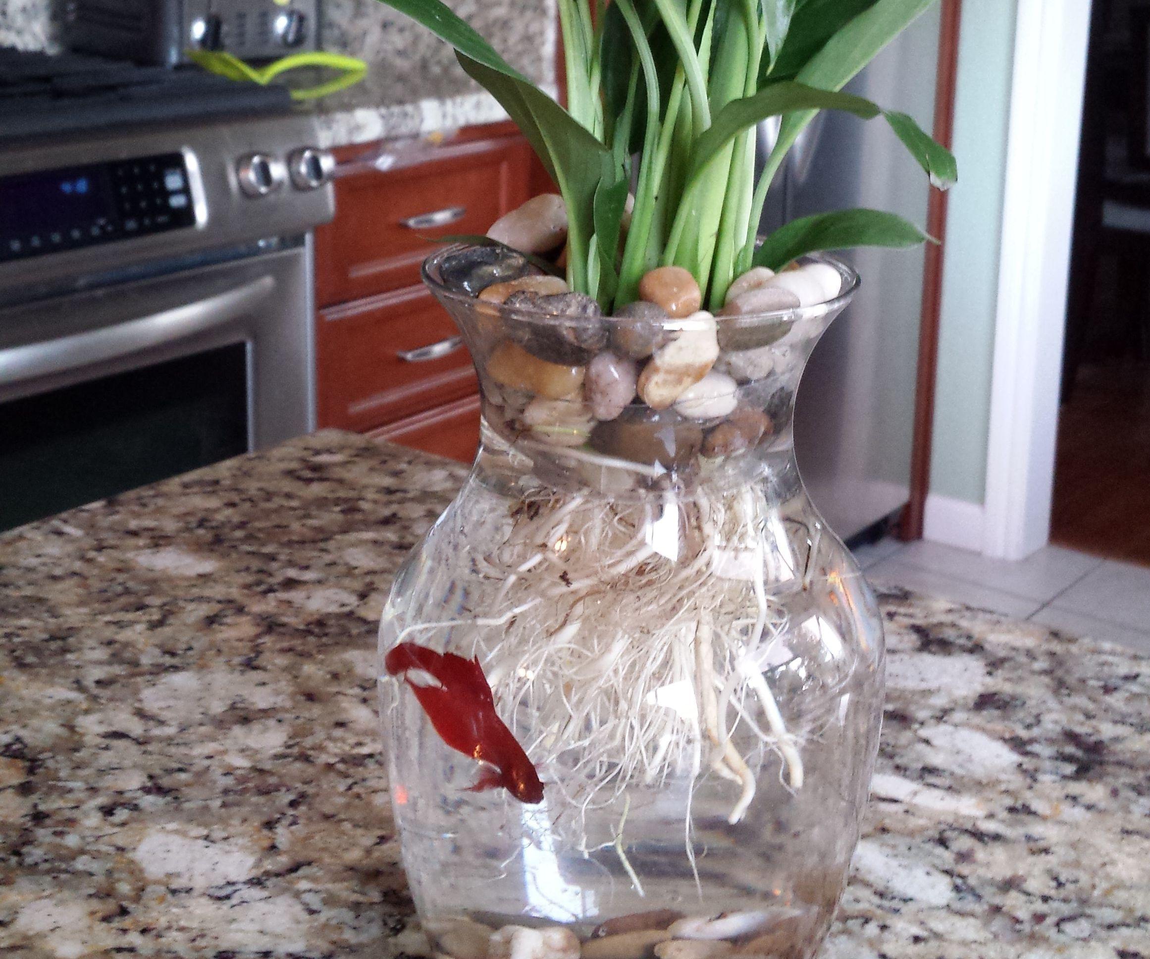 Instructables & $8 Betta Fish \u0026 Flower Vase: 4 Steps