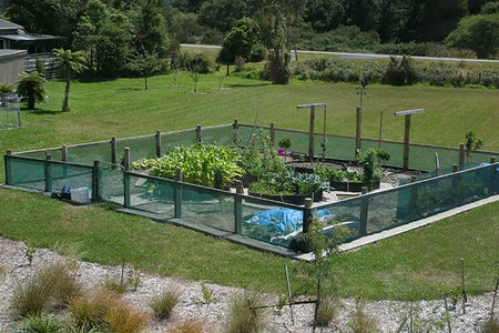 Raised Beds in Use