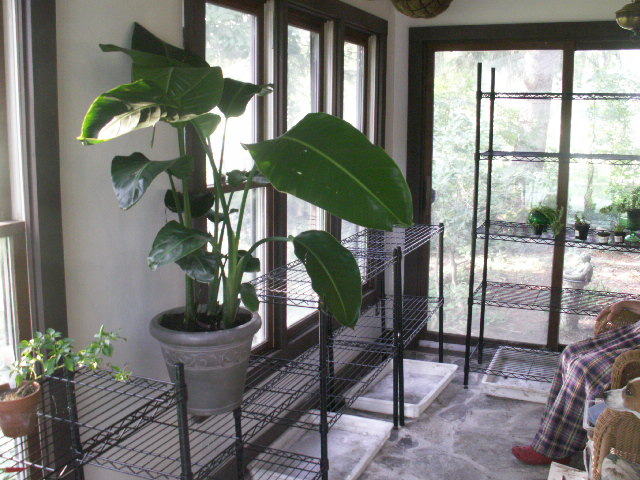 Picture of Convert Porch Into Greehouse