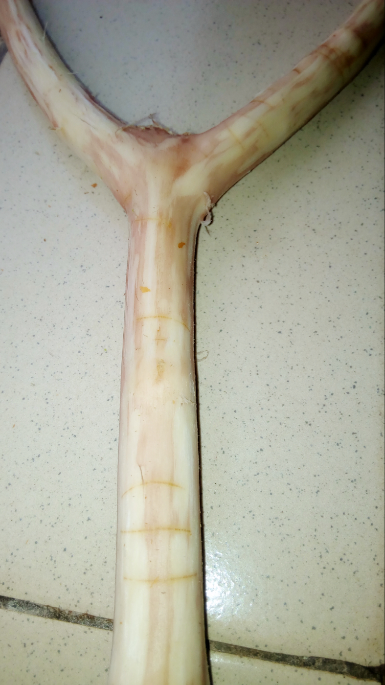 Picture of Shed the Skin