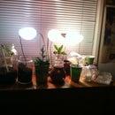 Keepin Plants Indoors