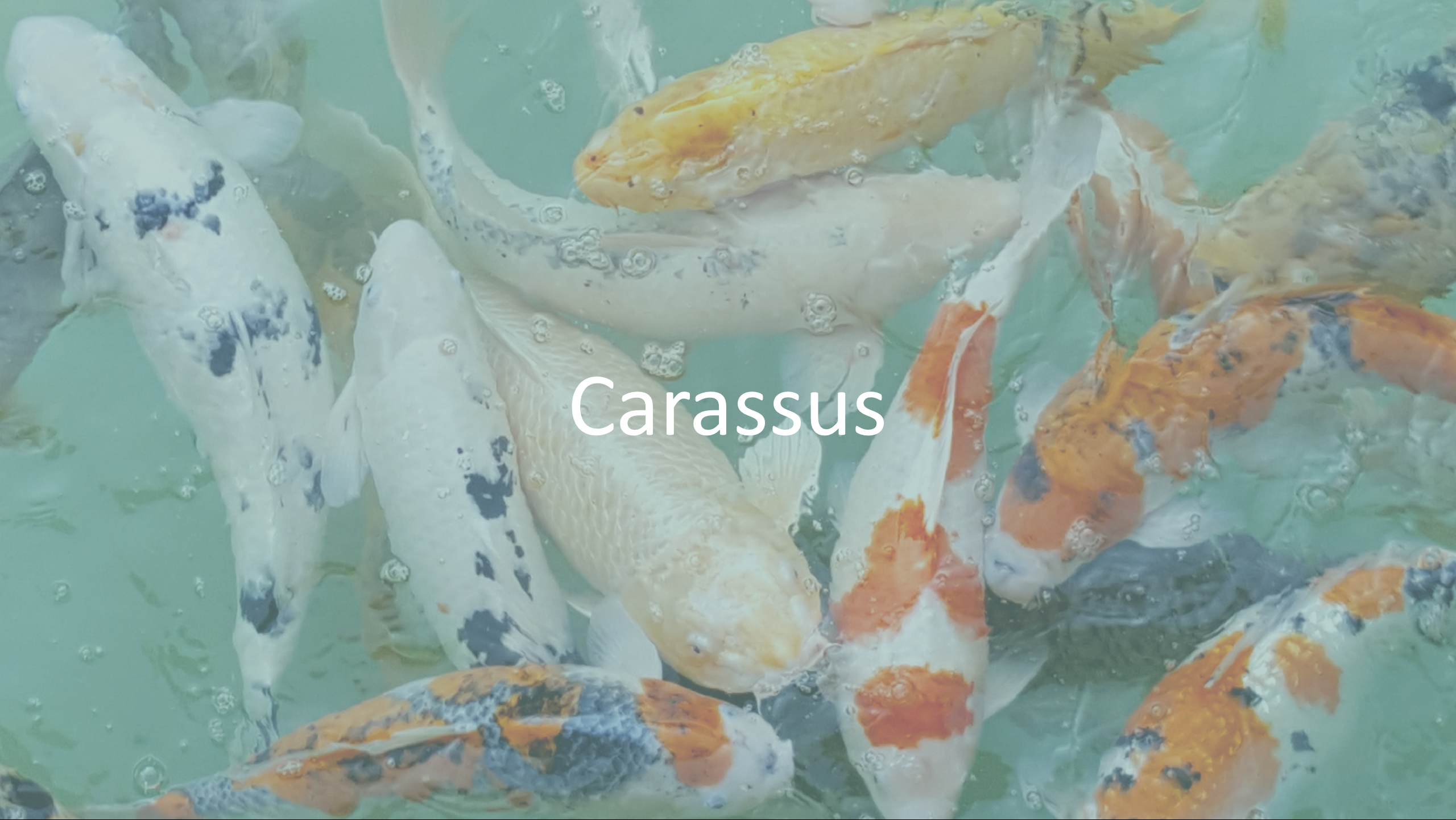 Picture of Carassus_IoT_electronic_project