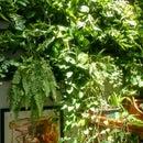 Jungle Wall: Vertical Garden