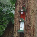 Woodland Des Res :)
