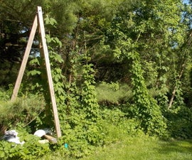 BEER, a Trellis for Hops,  a Support for Growing Them in Your Backyard.