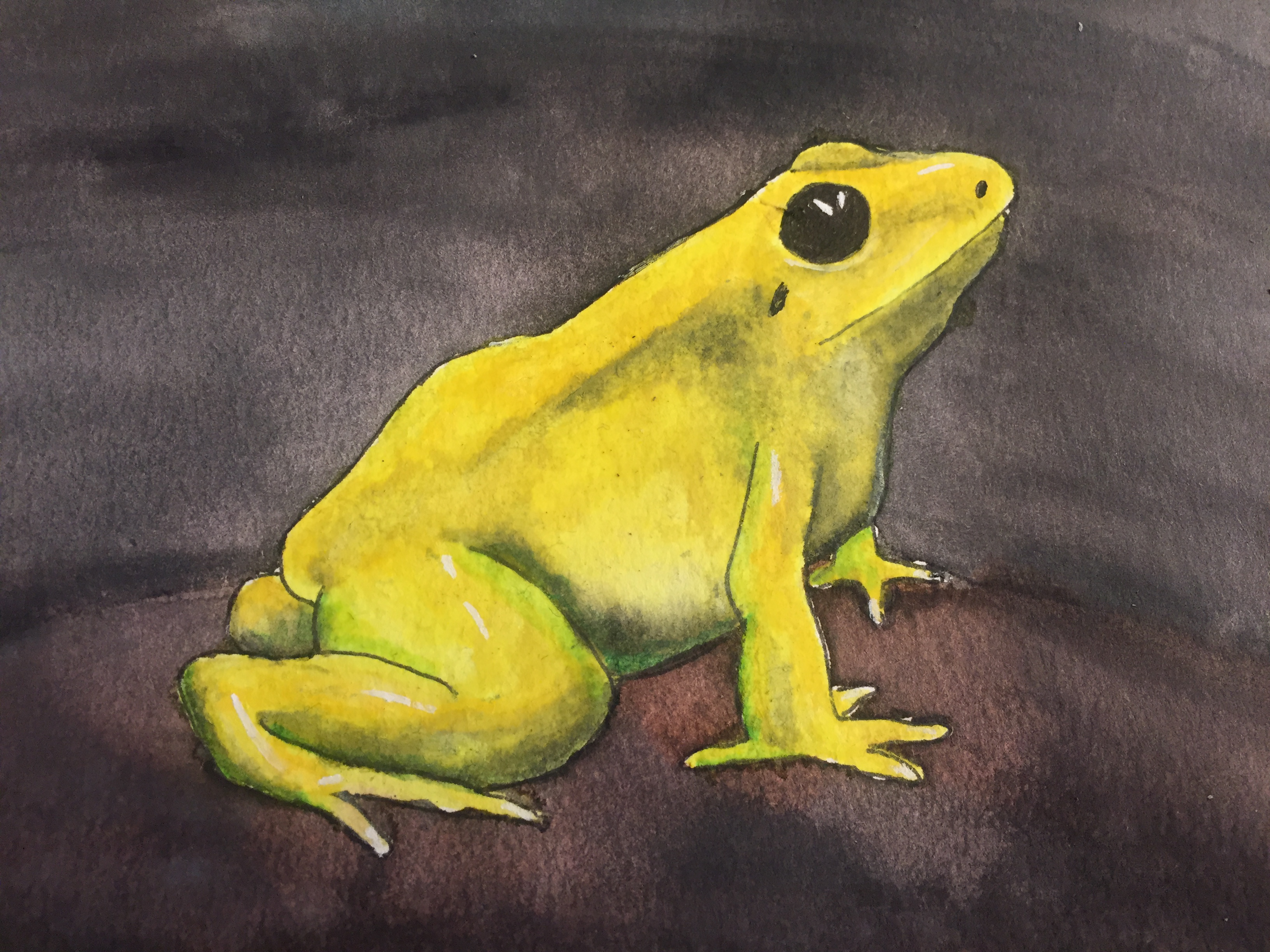 Picture of How to Paint a Yellow Frog