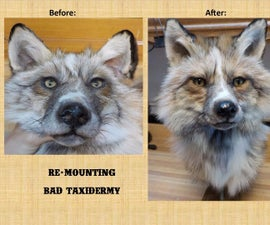 Re-Mounting Bad Taxidermy