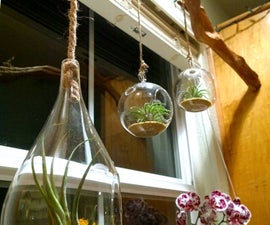 Live Branch - Hanging Terrarium