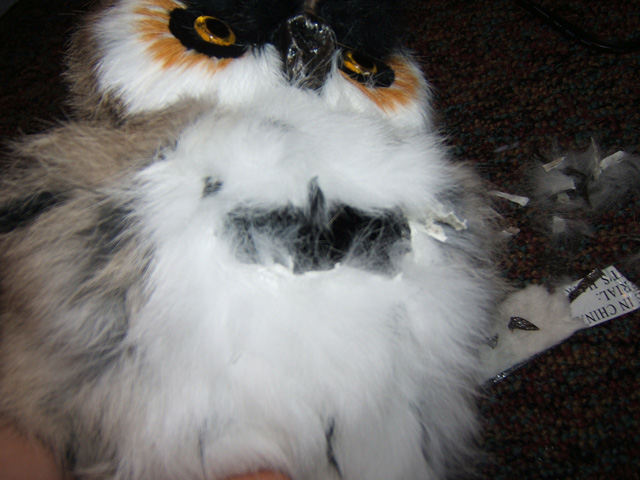 Picture of Mutilate the Owl.