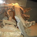 How to Build a Healthy Habitat for your Bearded Dragon